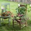 Độc đáo vườn xinh mọc ra từ… ghế