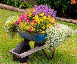 Dùng đồ tái chế làm đẹp sân vườn