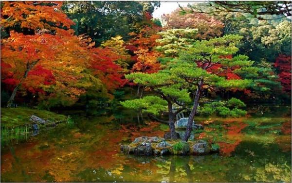 Những khu vườn theo phong cách Nhật đều toát lên vẻ đẹp giản dị, thanh bình.