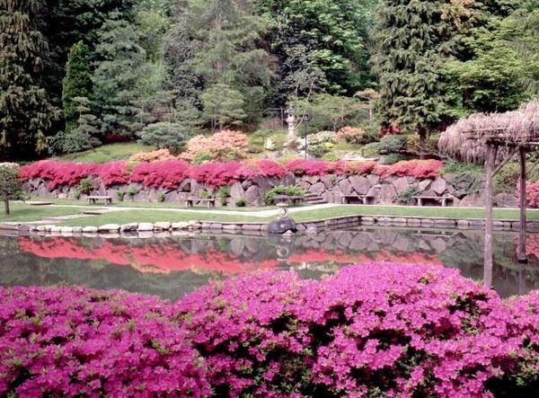 Lựa chọn những loại hoa phù hợp cũng là một trong những yếu tố vô cùng quan trọng trong việc thiết kế vườn theo phong cách Nhật